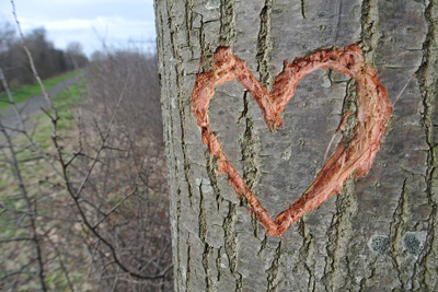 WKMF heart carved tree
